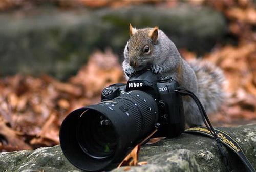 como tirar as melhores fotos