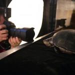 Sartore fotografando uma tartaruga comum da amazônia